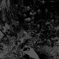 PRIMITIVE MAN AND UNEARTHLY TRANCE - Split